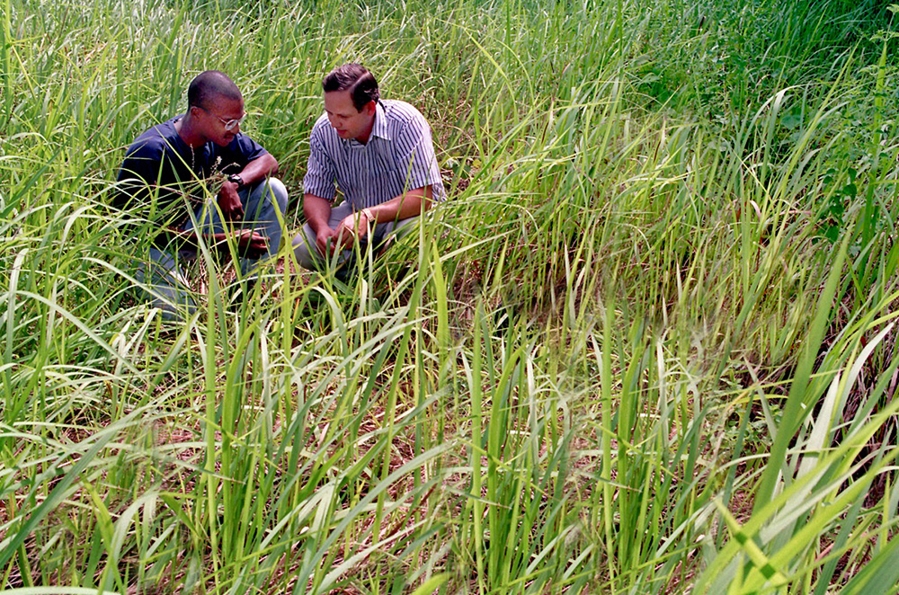 Two men in field with cogongrass