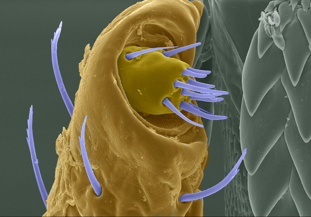 tick closeup